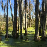 Low country swamp Royalty Free Stock Photos