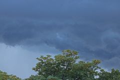 SYRINGA TREE AND DARK CLOUDS. Low dark cloud layer and top of syringa tree in ominously stormy sky Stock Image