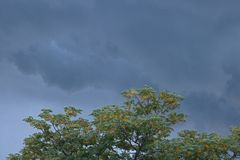 SYRINGA TREE AND STORMY SKY. Low dark cloud layer and top of syringa tree in ominously stormy sky Stock Photo