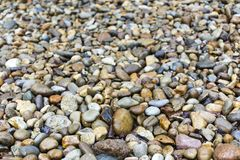 Low depth of field photo of pebbles. At a river basin Stock Images
