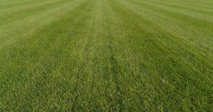 Flight forward over beautiful green grass stock footage