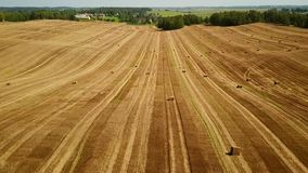 Low flight over cultivated fields with haystacks after harvesting. Aerial motion view stock video