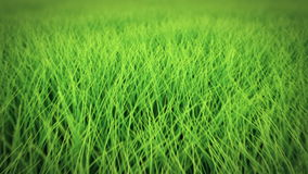 Low flight over grass, DOF, seamless loop