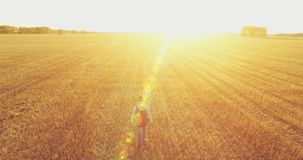 Low flight over young man tourist walking across a huge wheat field stock video footage