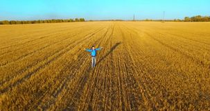 Low flight over young man tourist walking across a huge wheat field. Hands up, winner, happy and freedom concept. stock video footage