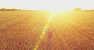Low flight over young man tourist walking across a huge wheat field. Hands up, winner, happy and freedom concept. stock footage