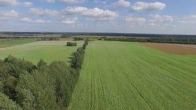 Low Flying abowe grass green field stock footage