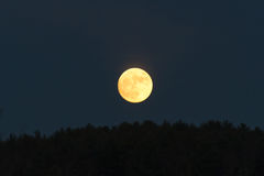 Low golden moon in the dark sky just above the tree line. Low golden moon in the dark grey sky just above the silhouetted tree line Stock Image