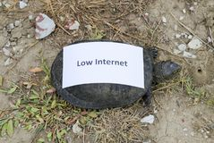 Low internet. A bad internet symbol. Low download speed. Slow internet. Ordinary river tortoise of temperate latitudes. The tortoi Stock Images