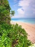Low Isles - Queensland Australia Royalty Free Stock Photos