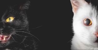 Low key cat - With big yellow demon eyes - black background Stock Image