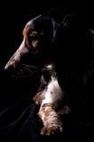 Low key dog portrait royalty free stock image