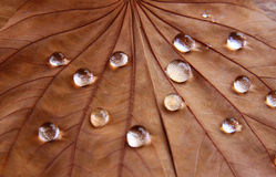 Low key image of Dry leaf with dewdrops on wooden background. selective focus stock photos