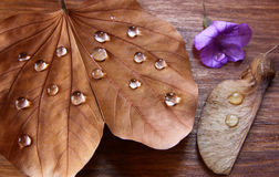 Low key image of Dry leaf with dewdrops on wooden background. selective focus. Royalty Free Stock Photo