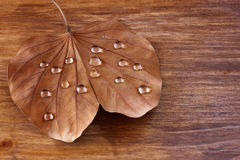 Low key image of Dry leaf with dewdrops on wooden background. selective focus Royalty Free Stock Images