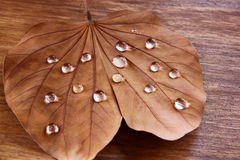 Low key image of Dry leaf with dewdrops on wooden background. selective focus. Stock Photography