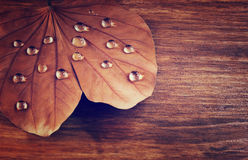 Low key image of Dry leaf with dewdrops on wooden background. selective focus. filtered image. Royalty Free Stock Photos