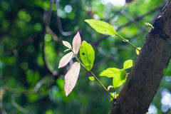 Low key of the peak green plant leaves. Selective focus Royalty Free Stock Images