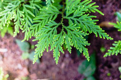 Low key of the peak green plant leaves. Selective focus Stock Photos