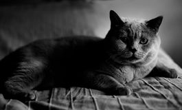 Low key portrait of cat Stock Image