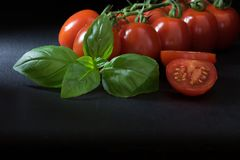 Low key shot of shrubs tomatoes with a leaf of basil and with pl Royalty Free Stock Image