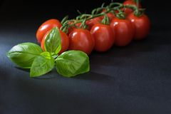 Low key shot of tomatoes with a leaf of basil Royalty Free Stock Photo