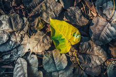 Low key of yellow-brown leaf on wet autumn floor in a park Stock Photo