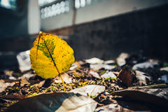Low key of yellow-brown leaf on wet autumn floor in a park Royalty Free Stock Photography