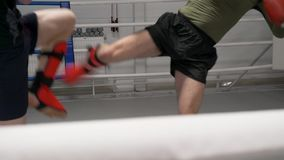 Low Kicks Legs Kickboxing Athletes Sport Workout. Fighters Train Indoor Gym Competition Man Exercise Fast Movements. Sportsmen Fight Physical Activity Healthy stock footage