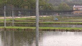 Low laithe trout, sturgeon and carp other fish farm breeding in the rescue, for sale at Christmas, protection of the. Low laithe trout, sturgeon and carp other stock video footage