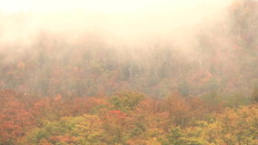 Low lying clouds over tree tops. Video of low lying clouds over tree tops stock video footage