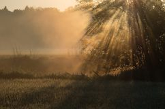 Low mist with sun rays rising between trees stock photos