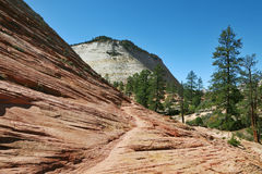 The low pine Zion National Park in the U.S Stock Photography
