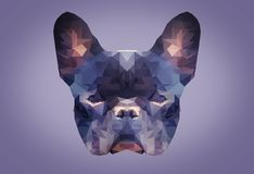 Low poly abstract portrait of a french bulldog on purple background . . low polygon royalty free stock photos
