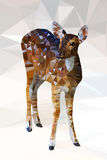 Low poly geometric of deer Stock Images