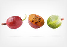 Low Poly Gooseberry fruit. Vector illustration of Gooseberry fruit in low poly design Royalty Free Stock Images