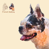 Low poly head french bulldog Royalty Free Stock Photos
