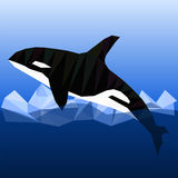 Low poly killer whale. Grampus killer whale in low poly style. Vector polygonal illustration of killer whale on ice water background Royalty Free Stock Photo