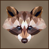Low poly Raccoon Stock Photography