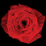 Low-poly Red Rose Royalty Free Stock Photography