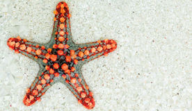 Low-poly Starfish Background Royalty Free Stock Images