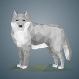 Low poly wolf. Vector illustration in polygonal style. Beautiful forest animal on gray background Royalty Free Stock Images