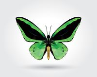 Low polygon butterfly green wings black stripe isolated on white background, fresh verdant insects flying. Logo icon geometric. Bug polygonal crystal style stock illustration