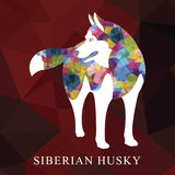 Low polygon Siberian husky design. Vector illustration. Stock Images