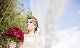 Bride with long veil blowing in wind. A low profile of a bride with long veil blowing in the wind holding a bouquet of red roses Stock Photography