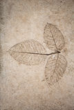Low relief leaf on cement Royalty Free Stock Images