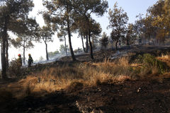 Low scale fire at a Seich Sou forest - Thessaloniki, Greece Royalty Free Stock Image