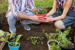 Low section of gardeners holding potted plant at garden Royalty Free Stock Images