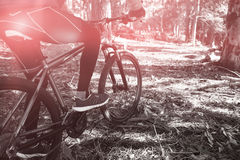 Low section of male mountain biker riding bicycle in forest Stock Image