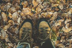 Low Section of Man Standing on Autumn Leaves Stock Image